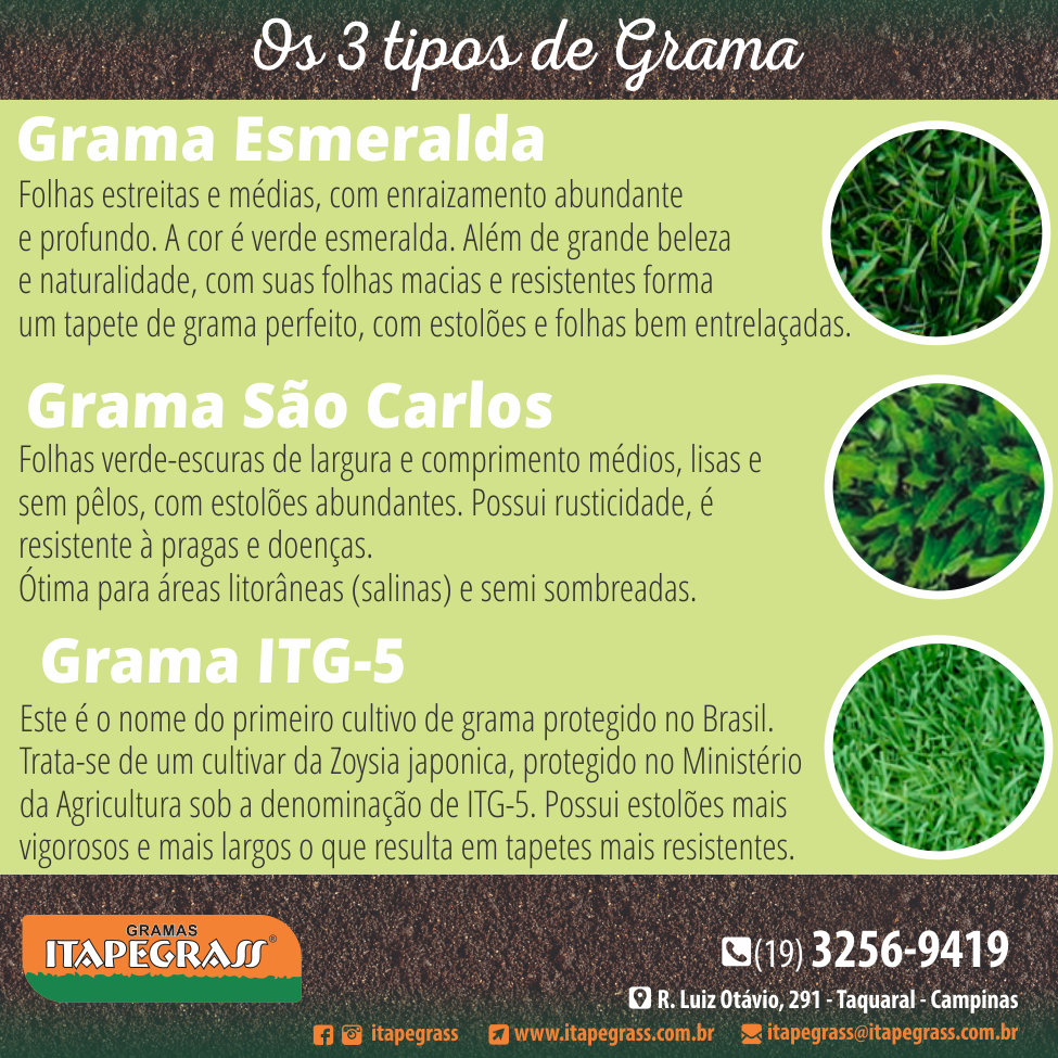 Posts Itapegrass 20-02